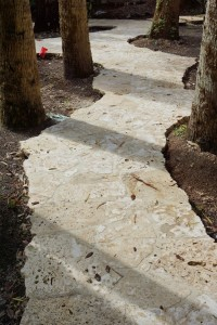 Caribbean Shell Pathway. Flagstone Caribbean Coral Stone
